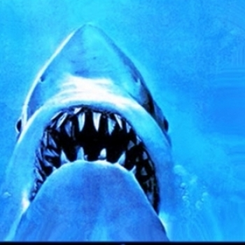 Most Shark